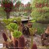 Sternbald Verlag: Kalender Botanischer Garten 2015 beinahe ausverkauft