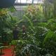 Grüne Weihnacht möglich: Öffnungszeiten des Botanischen Gartens an den Feiertagen