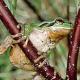 Wem nützt und wer bezahlt Artenvielfalt