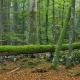 Greenpeace zeigt Multivision Europas wilde Wälder