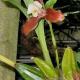 Botanischer Garten – Winterattraktion am 5. Dezember und Öffnungszeiten