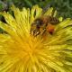 Themenschwerpunkt Bienen bei Kreismitgliederversammlung der GRÜNEN
