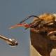 Wie Bienen lernen, welchen Düften es zu folgen lohnt
