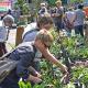 Botanischer Garten Lahnberge: Pflanzenmarkt macht Lust auf bunte Gärten
