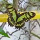 Besuch im Schmetterlingshaus im Botanischen Garten
