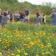 Frühlingsfest in den Richtsberggärten am 10. Mai