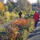 Willkürliche Vernichtung wäre schlimmster nicht zu tolerierender Frevel – Der Naturschutzbeirat zum Botanischen Garten