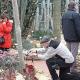 Schau-Orchideen im Botanischen Garten – Erwerb von Exoten war möglich