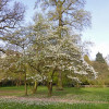 Der Alte Botanische Garten – eine grüne Oase in der Stadt