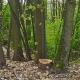 Bäume fällen um Wohnraum zu schaffen – Von einem aktuellen Konflikt in Marburg
