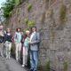 Vegetation auf alten Mauern bereichert Artenvielfalt