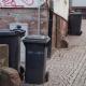 Mikrochips für Mülltonnen in der Oberstadt