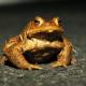 Schranken sollen die Fortpflanzung für Kröten und Molche sichern