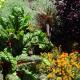 Urban Gardening in Marburg: Kräuter, Obst und Gemüse im öffentlichen Raum