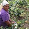 Vortrag: Arbeits- und Lebensbedingungen von Kaffeebäuerinnen in Honduras