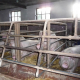 Internationale Grüne Woche – VIER PFOTEN fordert: Beendet die Käfighaltung von Nutztieren