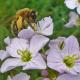 Tipps zum Tag der Bienen – Lieblingskräuter von Mensch und Biene