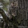 Wildkatzenerfassung im Krofdorfer Forst höchst erfolgreich – bislang 50 verschiedene Wildkatzen nachgewiesen