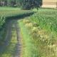 AG Biodiversität berät: Bewahrung und Pflege der Kulturlandschaft sind Themen