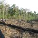 Biodiversitätskrise: Technische Fortschritte reichen als Antwort nicht aus