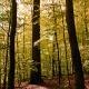 Nutzungsverzicht im Wald schadet Wald und Klima:  Nabu Hessen fordert eine großzügige Ausweisung von Wald-Wildnisgebieten