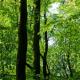 Nachhaltige Waldbewirtschaftung leistet einen größeren Beitrag zum Klimaschutz als Waldwildnis