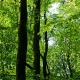 Klimaschutz durch Waldwirtschaft – Eine Analyse und Quantifizierung der Klimawirkungen nachhaltiger Holznutzung in Deutschland