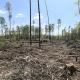 Baumbesetzer im Danneröder Wald wollen ausharren – Forderung Weiterbau der A49 einstellen