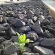 Vom Elend der Steingärten – Chlorophyll kämpft sich durch Basaltschotter