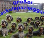 Dackelspaziergang im Bergpark Wilhelmshöhe Vol. II