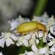 Verarmte Flora in Wiesen und Wäldern gefährdet Insekten – Wo wegen der Landnutzung die pflanzliche Vielfalt abnimmt, leben weniger Insekten und die Biodiversität nimmt ab