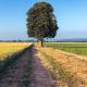 Jagd als Thema beim zwölften Baumgeflüster: Lesung unter der Roßkastanie im Ransbacher Feld