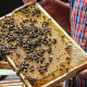 Lebensraum für Bienen im Park der Kreisverwaltung Biedenkopf