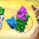 Hochwirksame und stabile Nanobodies stoppen SARS-CoV-2 – Klinische Test für Medikament in Vorbereitung