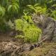 Wildkatzen kehren nach Marburg zurück