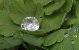 Wassertropfen in der Natur Foto H.Bambey