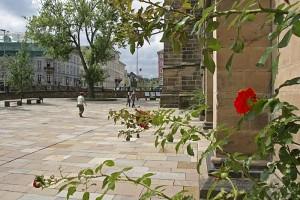 blühender Rosenbusch am Kirchenschiff