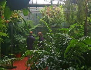 Grünpflanzen in Gewächshaus