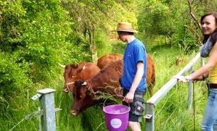 Tierhaltung