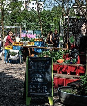 Urban Gardening Foto Nora Ackermann