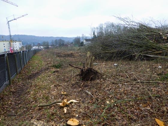 Anfang Februar wurde der größte Teil des Baumbewuches auf dem Vitos-Gelände abgeholzt, um dort Wohnungsbau beginnen zu können. Sternbald-Foto Hartwig Bambey