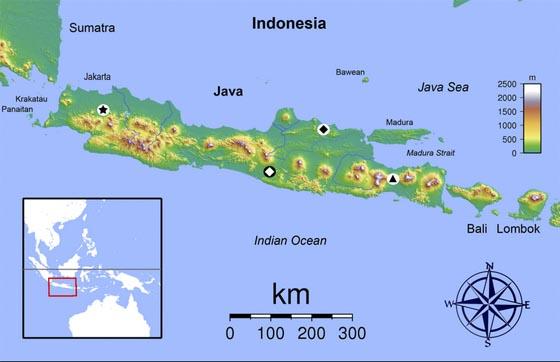 Eine Insel der Artenvielfalt: Das schwarze Dreieck im weißen Kreis markiert den Fundort der neuen Gecko-Art im Osten Javas. Karte: Sadalmelik (Commons, CC-BY-SA-3.0) und Sven Mecke, Philipps-Universität Marburg